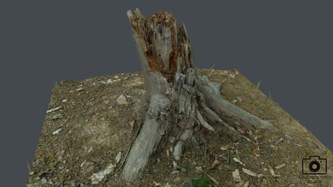 Broken tree_0002(Photogrametry.Photoscan.obj,Photo)