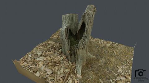 Broken tree_0003(Photogrametry.Photoscan.obj,Photo)