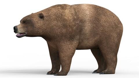 Wild Brown Bear 3D Model