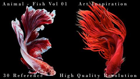 Animal - Fish Vol 01 - Art Inspiration