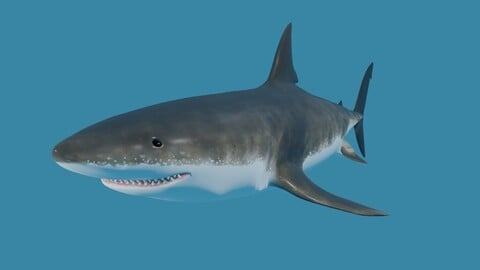 Shark - Tubarao Low-poly and High Poly 3D model