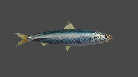 Fish - Sardine - Peixe Low-poly 3D model