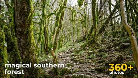 Magical Southern Forest - References For Artists