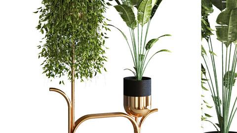 plant set 051
