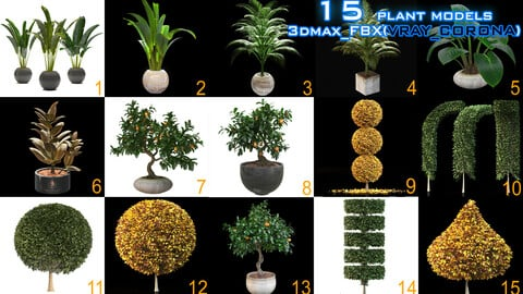 15 Models of plant