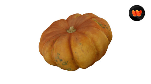 Squash Cucurbita maxima - Extreme Definition 3D Scanned Model