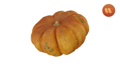 Squash Cucurbita maxima - Real-Time 3D Scanned Model