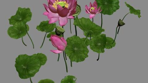 Elves Villa - lotus 05