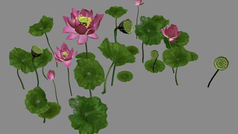 Elves Villa - lotus 06