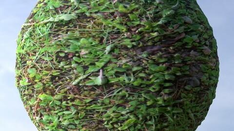 Grass 8 PBR Material