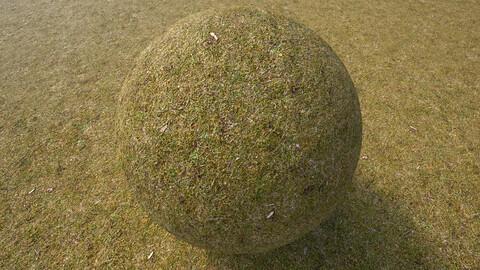 Grass (276) - Photogrammetry based Environment Texture
