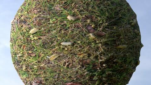 Grass 11 PBR Material