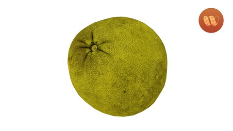 Pomelo Citrus maxima - Real-Time 3D Scanned Model