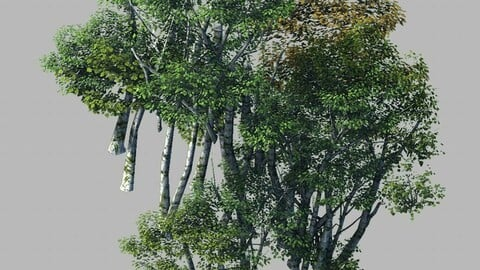 Plant Forest - Birch Grove 02