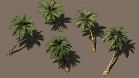 Plant - Coconut Tree 271