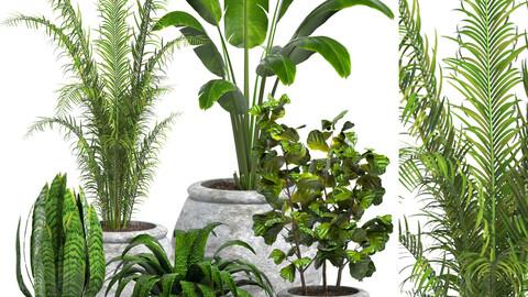 indor plants set01