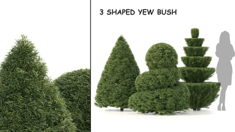 3 Shaped Yew Bush 03