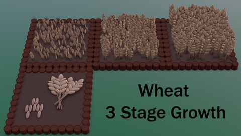 Wheat 3 Stage Growth