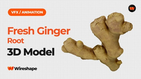 Fresh Ginger Root - Extreme Definition 3D Scanned