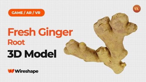 Fresh Ginger Root - Real-Time 3D Scanned