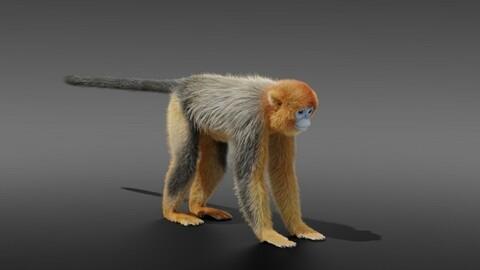 3D Animal | Golden Snub-nosed Monkey Fur