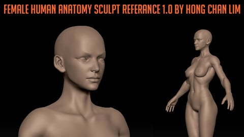 Female Human Anatomy zbrush Sculpt reference by Hong Chan Lim