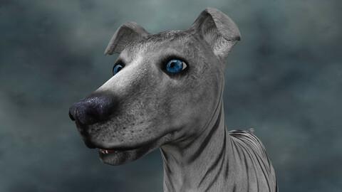 MDGH.011 Rigged Dog