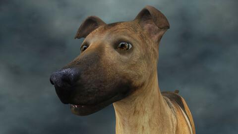 MDGH.013 Rigged Dog