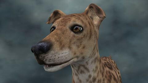 MDGH.017 Rigged Dog