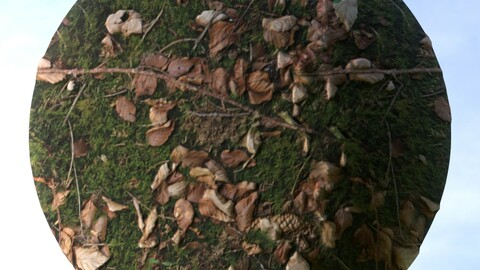 Forest Ground 17 PBR Material