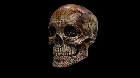 Human Skull Gore (5 PBR Materials)