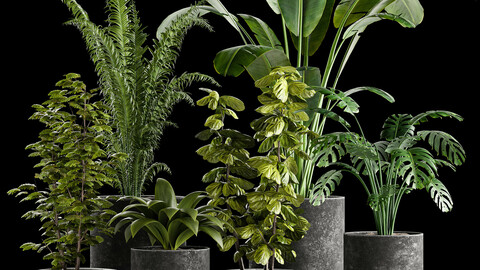 Indoor plant collection 01