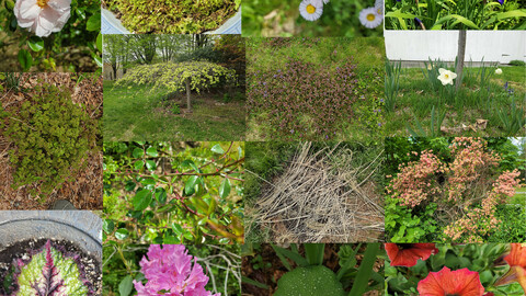 New England Flowers And Foliage Texture Reference
