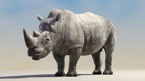 Big White Rhino