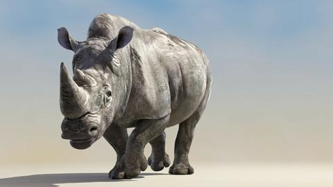 Big White Rhino Animated