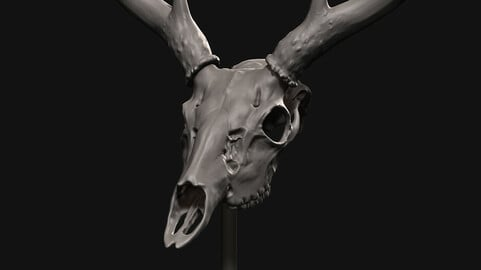 Deer skull with stand 3D print model