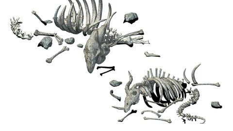 Sea bottom - animal wreckage 06