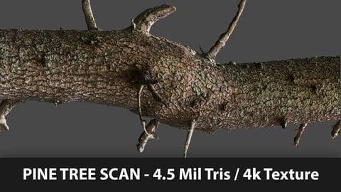 Pine Tree Scan + Blender Scene