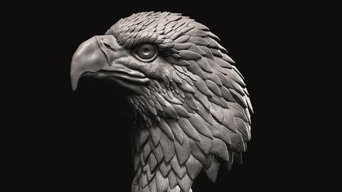 Eagle bust 3D print model