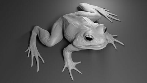 Frog basemesh