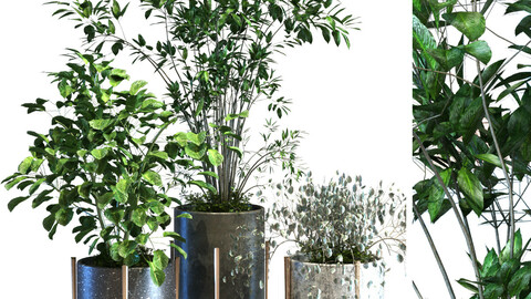 plant in box set 090