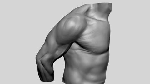 Shoulder Printable