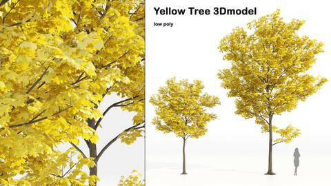 Yellow leaf autumn tree