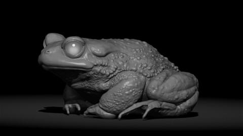 Frog STL
