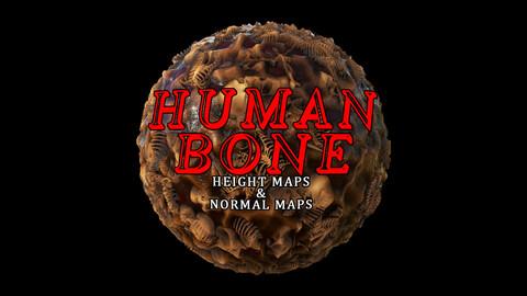 Human Bones [Height + Normal Maps]