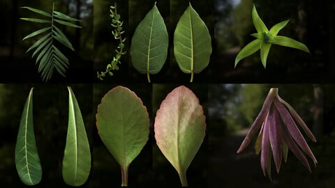 Leaf Pack- PBR Texture with Alpha Map - Vol.1