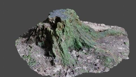 Tree Stump 2 - Photoscan