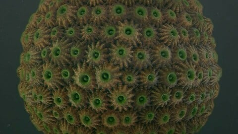 Substance Designer Coral A material .sbs file and Marmoset scene