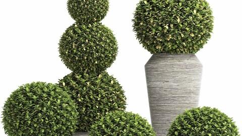 Concrete Tree Topiary - Indoor Plant 221