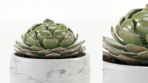 Decorative Vase_ 431_002